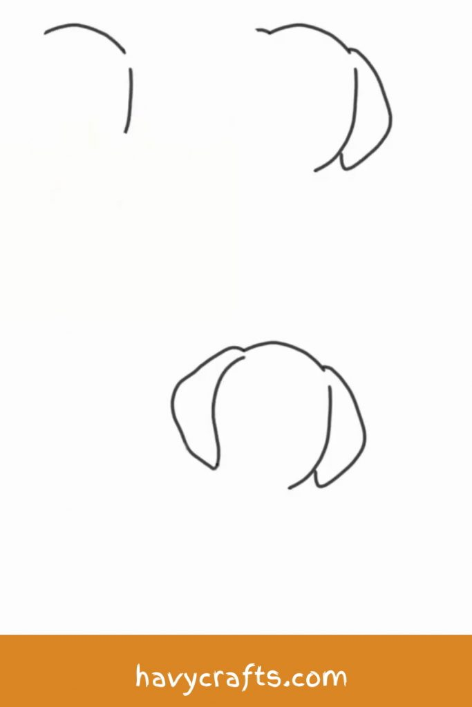 Drawing the dog's head