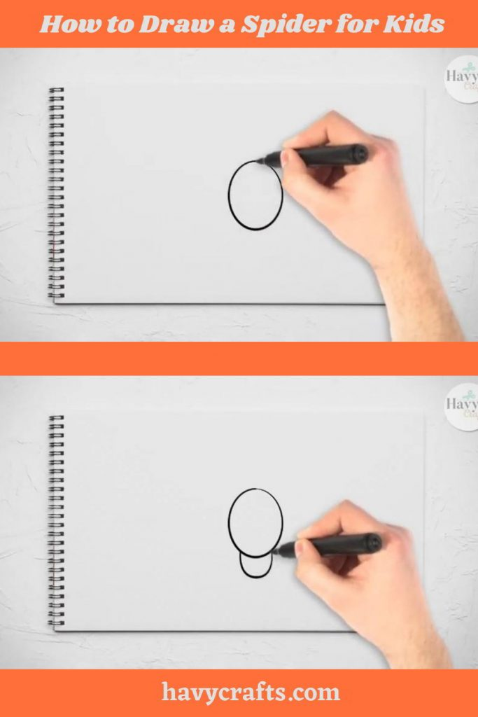 Draw the spider's body and head