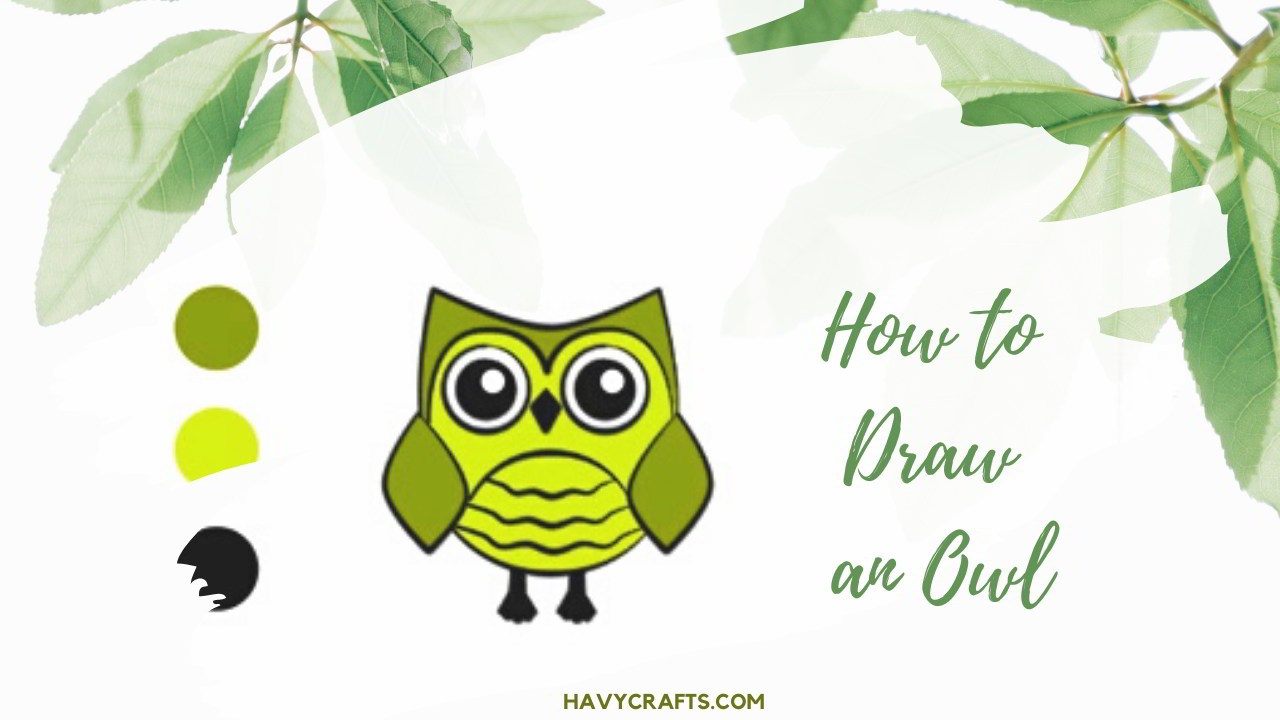 Feature of Owl drawing